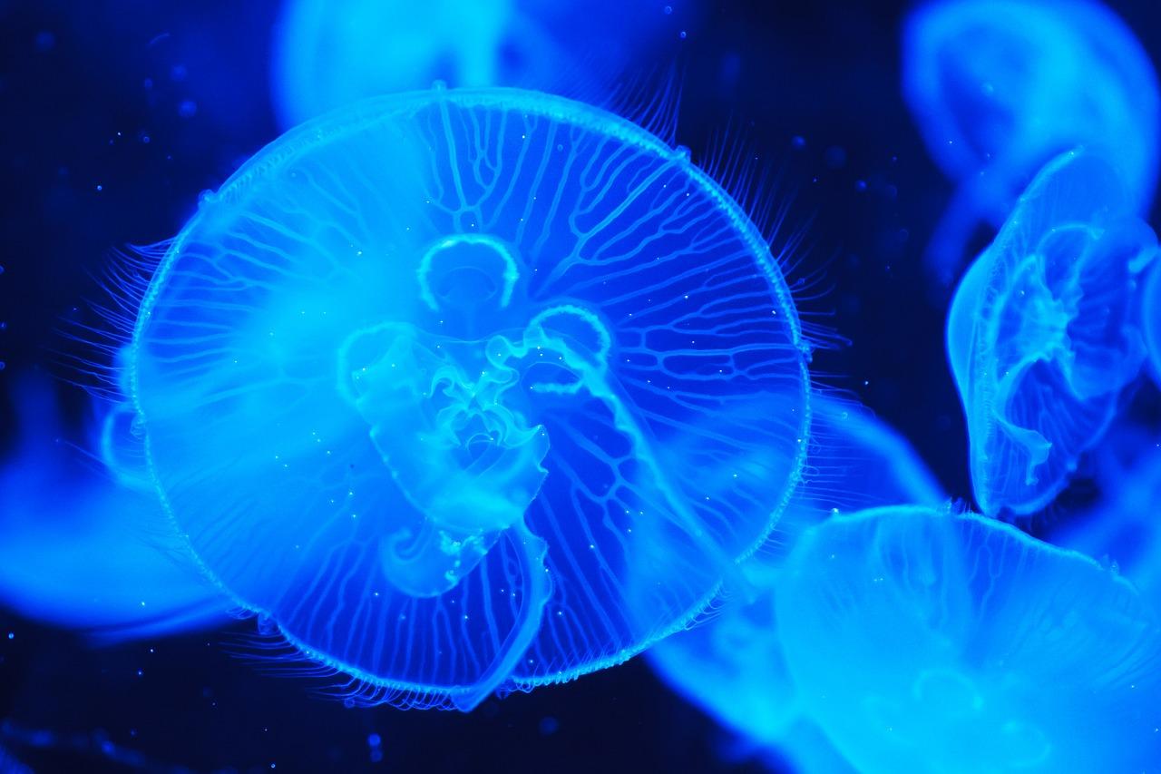 【クラゲ】クラゲって動物なの?不思議な生態と奇妙な成長方法!