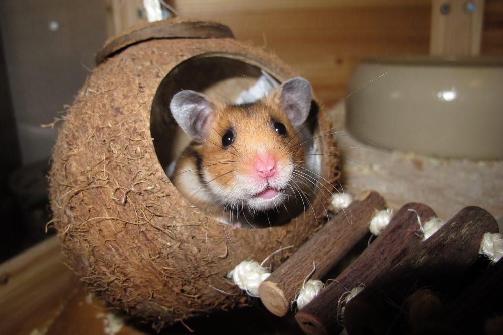 ハムスターと巣のおもちゃ