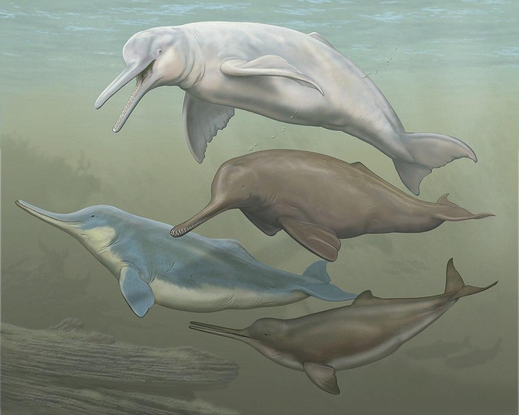 【カワイルカ】川に住むイルカが怖い!種類と不思議な生態