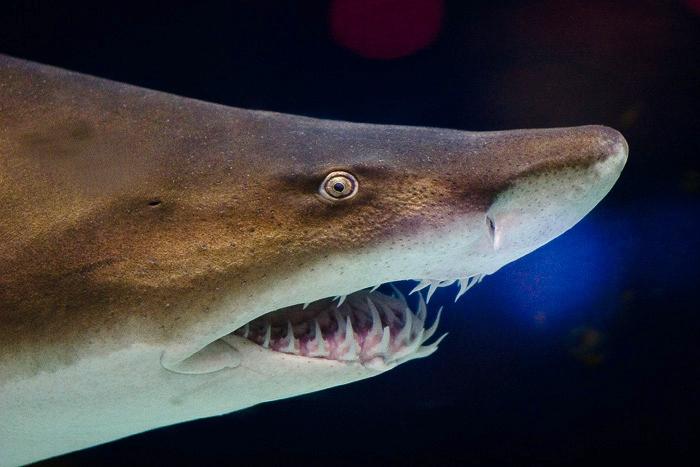【マニア向け】色んなサメのぬいぐるみ15選!かわいい・巨大・リアル!