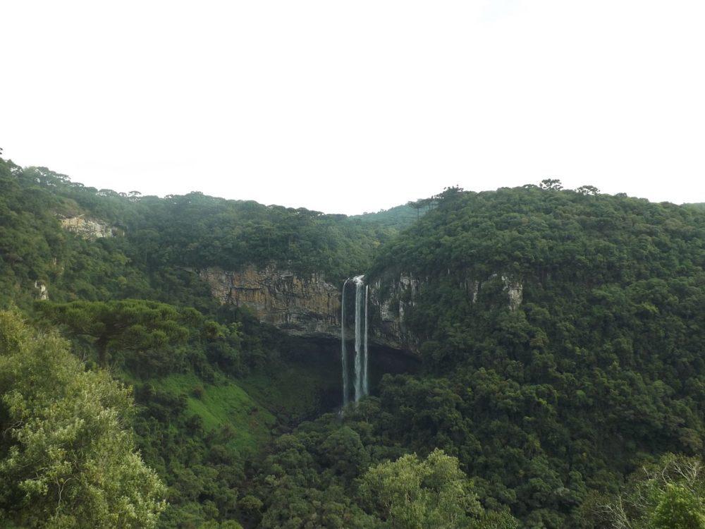 ブラジルのジャングル
