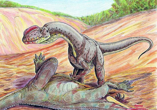 シノサウルス