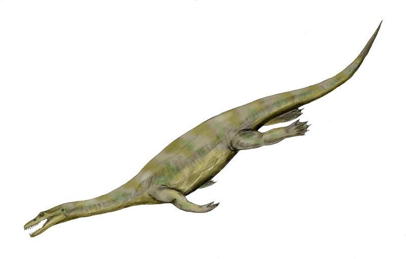 ノトサウルス