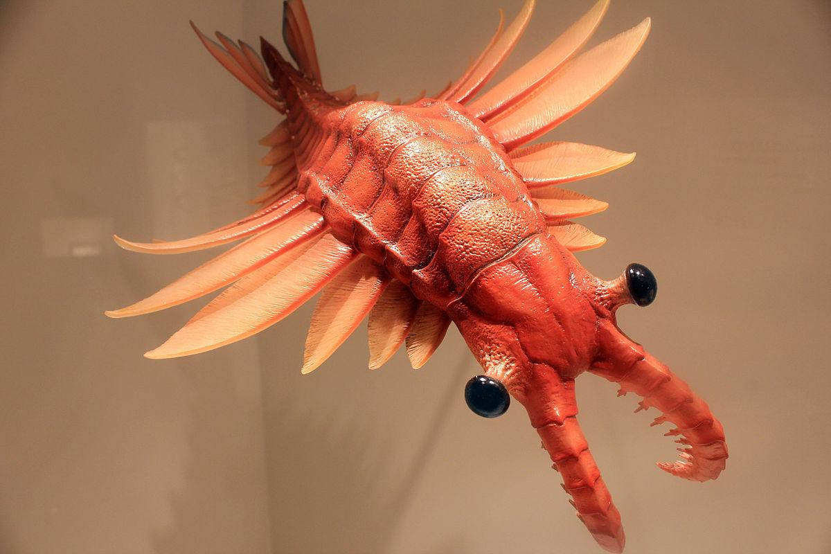 【アノマロカリス】圧倒的大きさ!奇妙な化石と絶滅の謎に迫る!