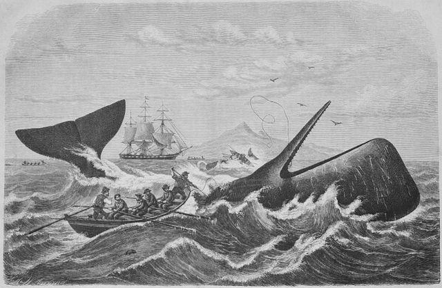 マッコウ クジラ 英語