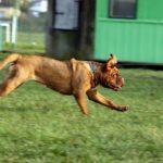 世界最速の動物は?空・海・陸上の最速生物TOP3!