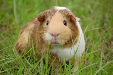 【ネズミの種類】画像でかわいいネズミたち!ペット&野生種10
