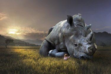 【絶滅動物一覧】人間のせい!ヒトが滅ぼした野生動物たち!