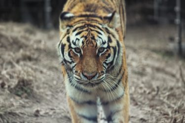【史上最強の生物一覧】一番強いのは?動物植物界のモンスター16選